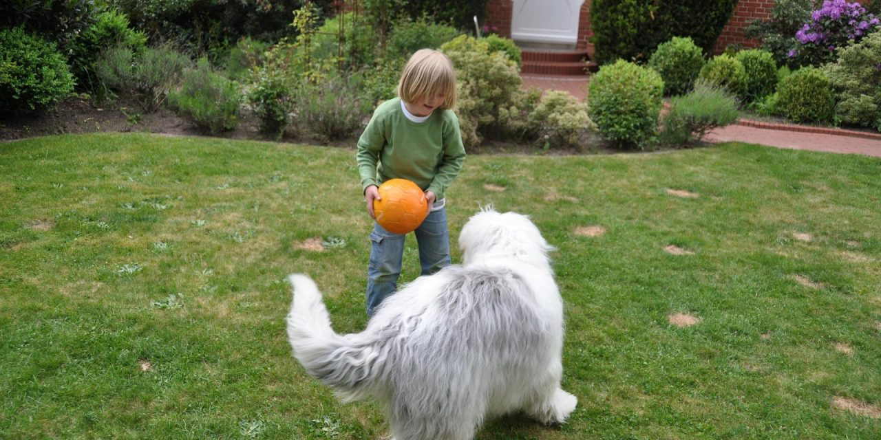 Transform Your Yard into a Safe Haven for Kids and Pets